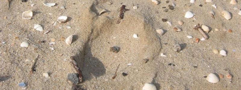 Strandsand an der Ostsee mit Steinen und Muscheln.