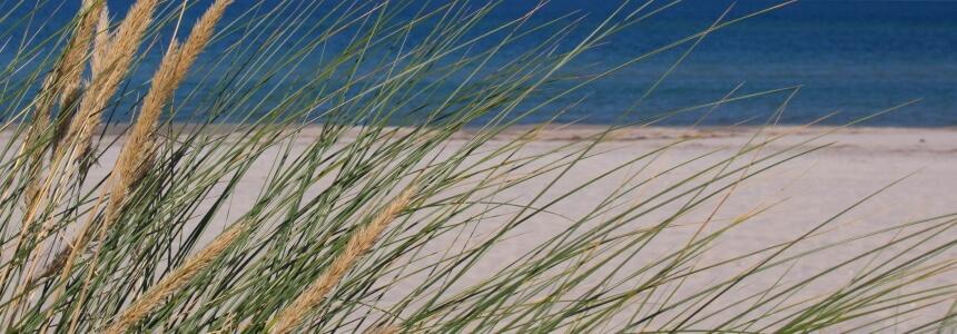 Strandbilder von der Ostsee - Dünen, Strandhafer und Meer